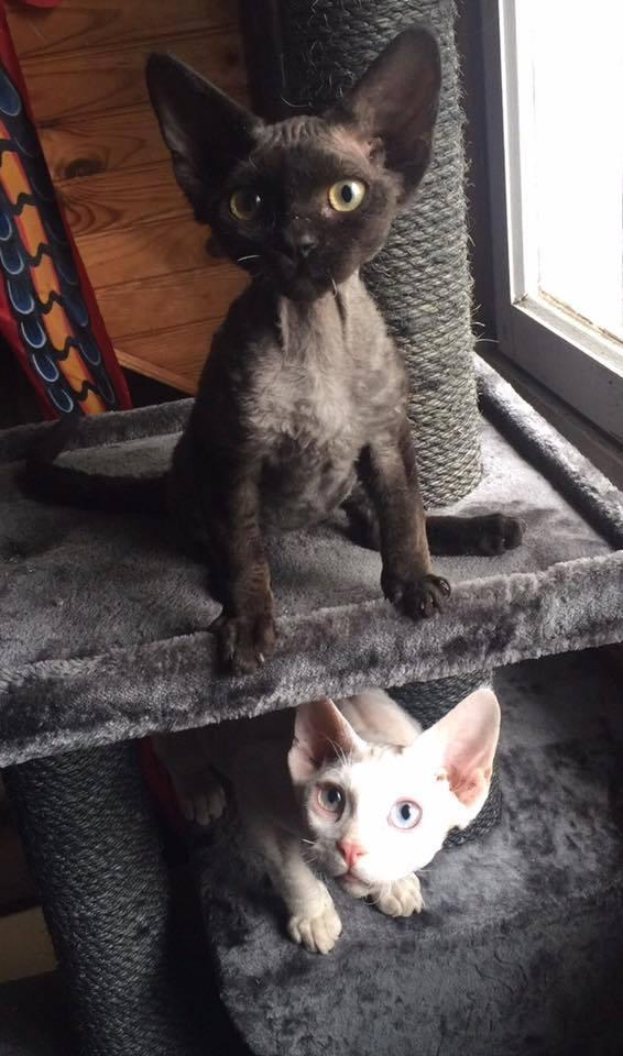 Octobre 2017 : les chatons de Kari Ne Pxp