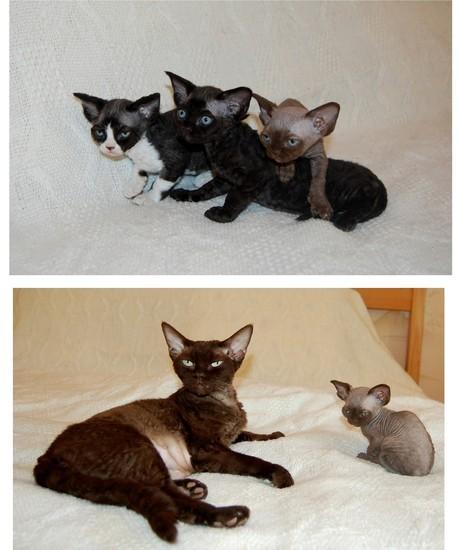 Septembre 2014 : Gaya du Caramy & ses 3 bébés de Caty Curtil
