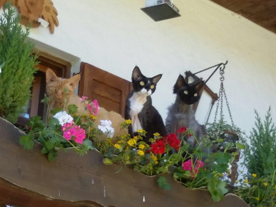Octobre 2019 : Les trois copains à Sandra Arnolfo New