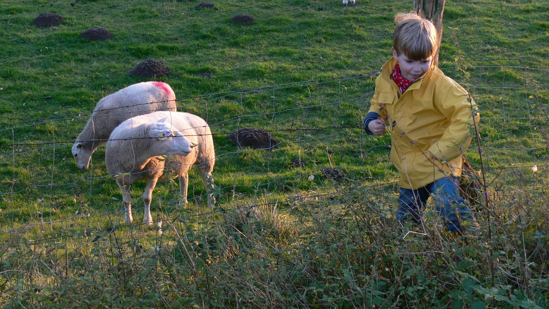 Kind und Schafe #AltesForstamtimteutoburgerwald#