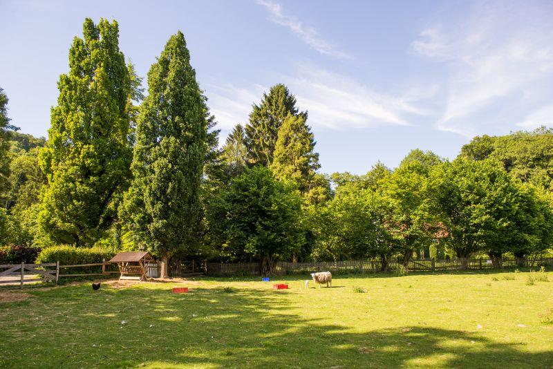 Blick auf die Säuleneiche #AltesForstamtimteutoburgerwald#