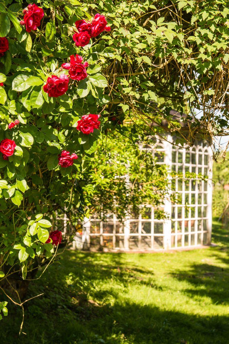 Pavillon mit Rosen #AltesForstamtimteutoburgerwald#