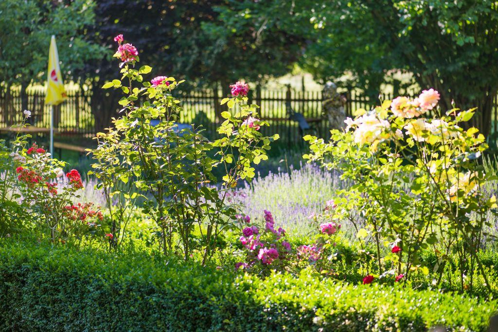 Blütenpracht im Garten Altes Forstamt im Teutoburger Wald