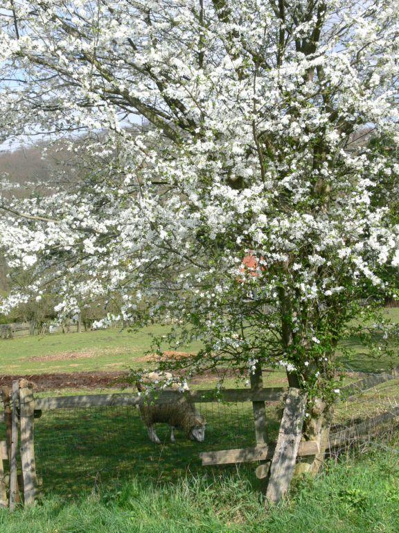 Frühling Ferienwohnungen Altes Forstamt im Teutoburger Wald