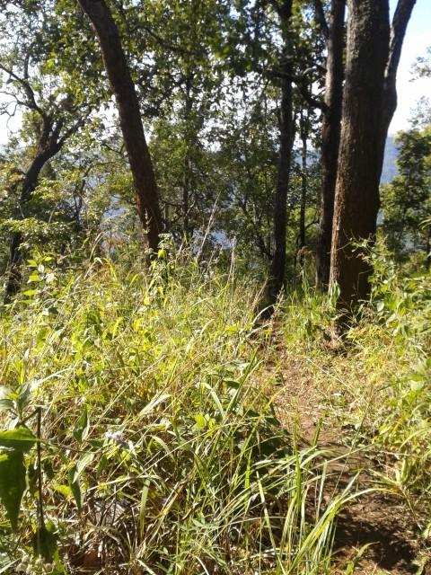 2 Tage Dschungeltrekking mit Elefantenreiten und Rafting