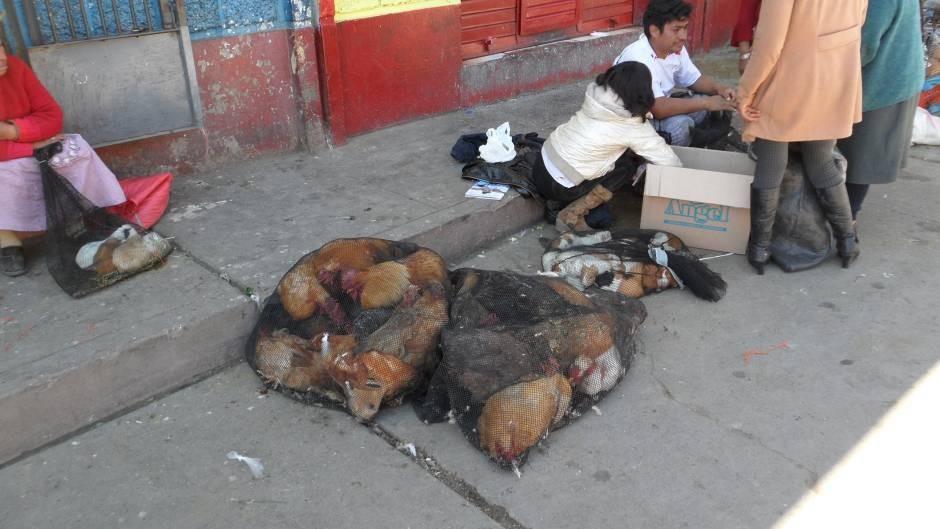 frischer geht es nicht (lebende Tiere werden so auf dem Markt angeboten)