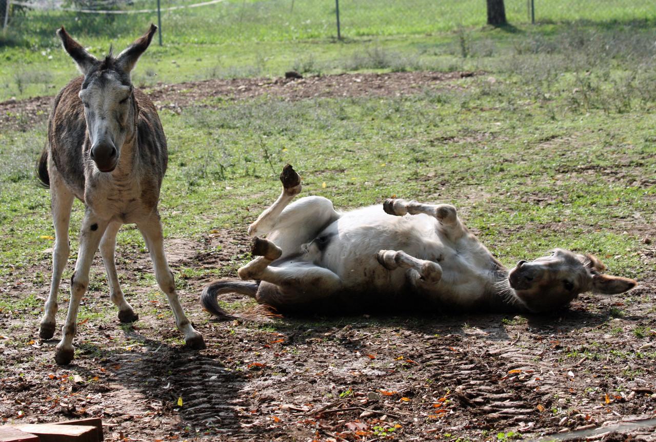 2 von unseren 3 Eseln