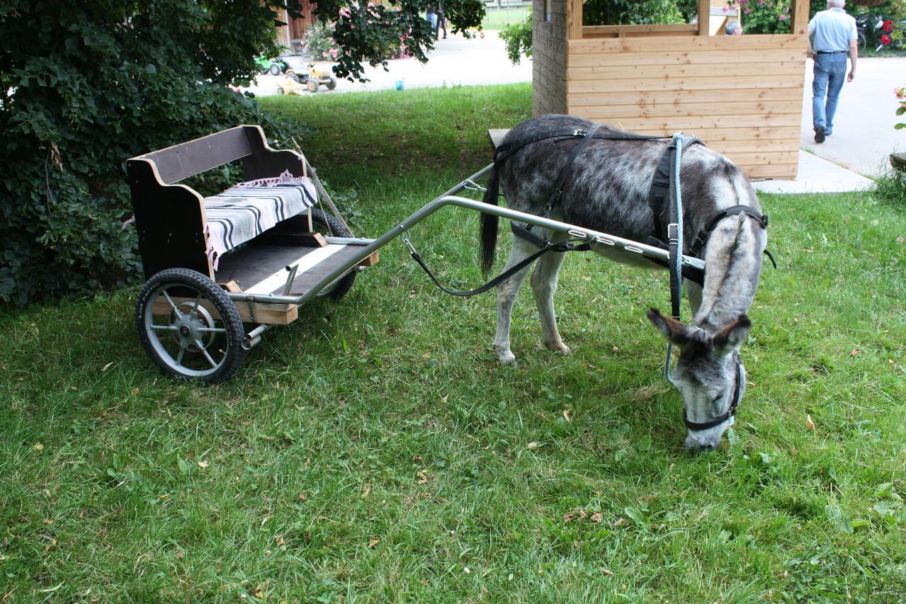 Eselreiten wird ein Mal im Monat angeboten