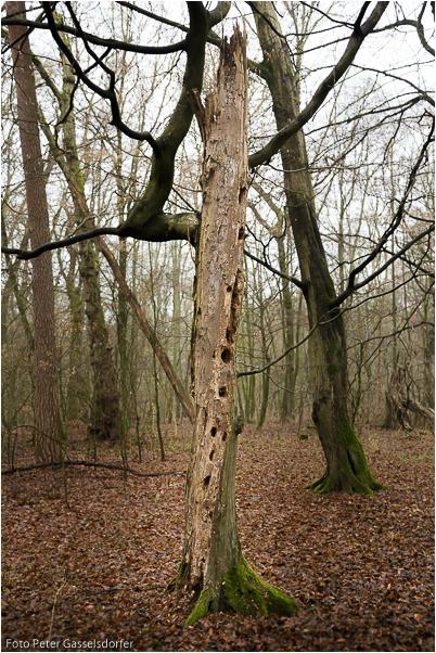 Nicht nur künstliche Nisthilfen sind nötig - Totholz ist nicht tot
