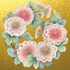 NO.13 美濃菊