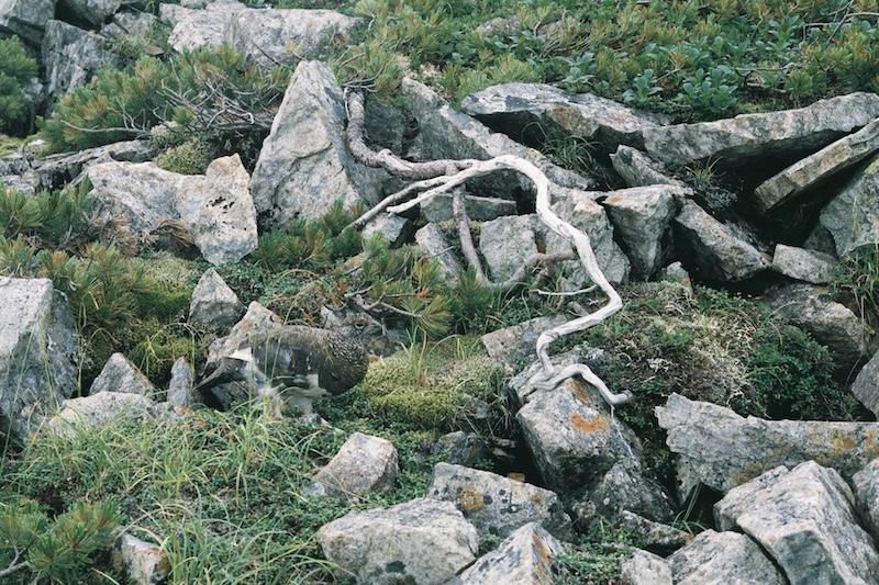 北アルプス 冷池山荘までの稜線散歩 2021.8.1-2