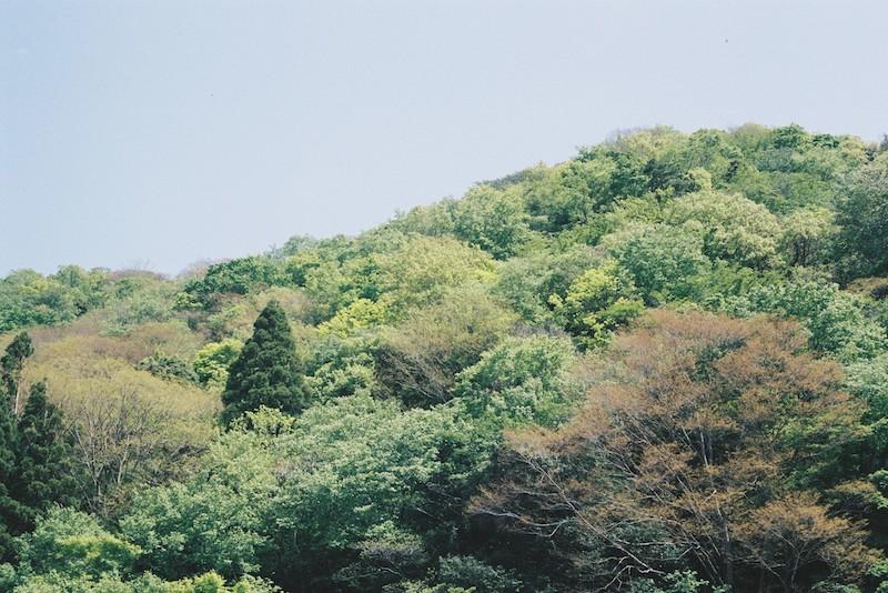 西丹沢 新緑の畦ヶ丸 2021.5.4