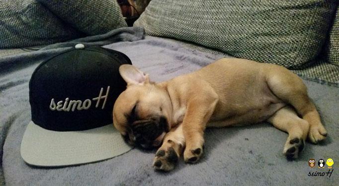Kleiner Hund schläft neben seimoH Snapback