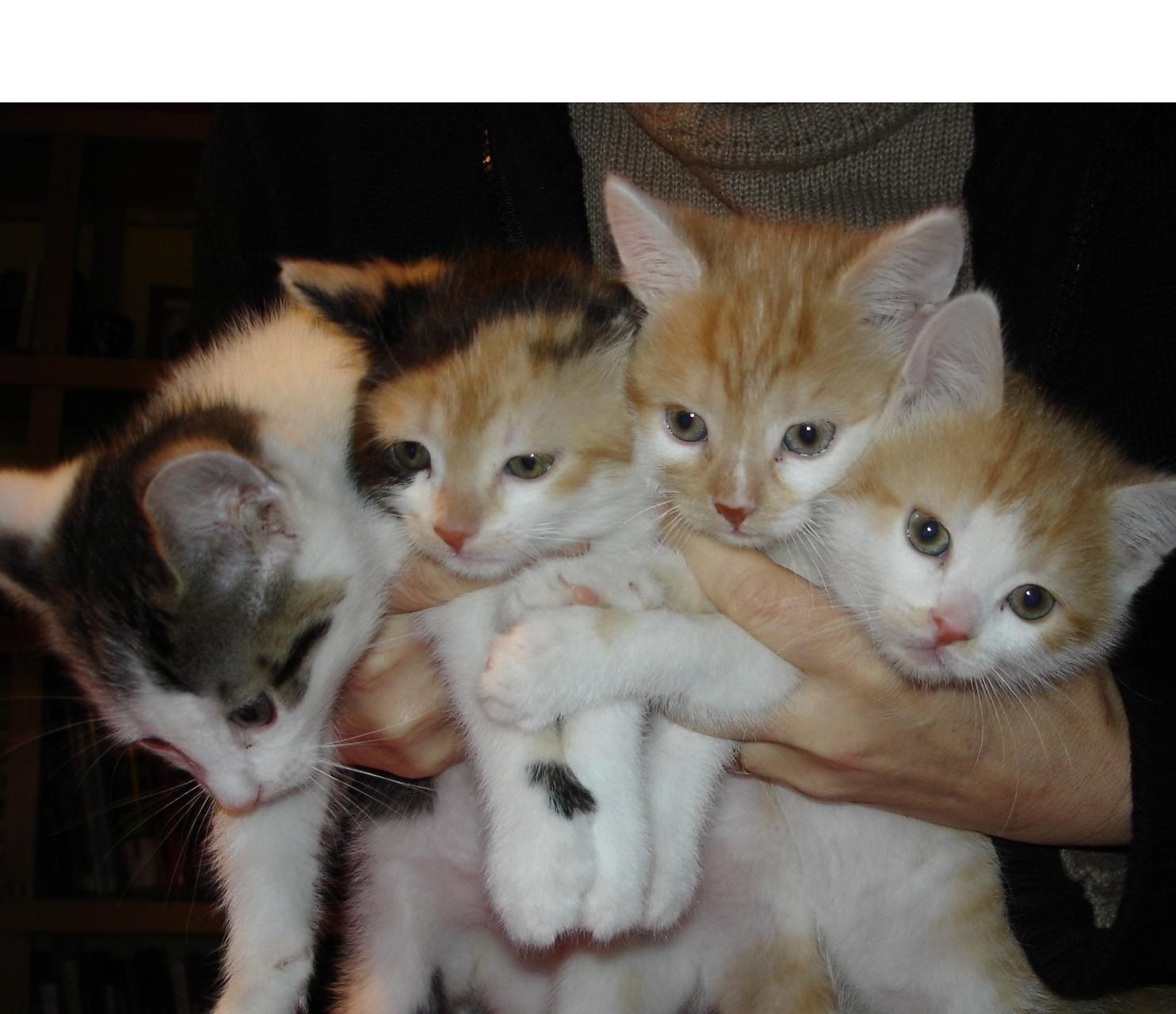 Oskar, Tiffi, Morpheus und Molli - Tiffi ist ebenfalls 2014 im gleichen Monat wie ihre Mutter ums Leben gekommen
