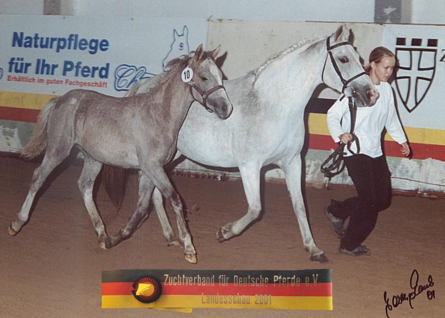 Kamerun's Gigolo
