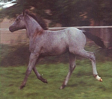 Kamerun's Giulia