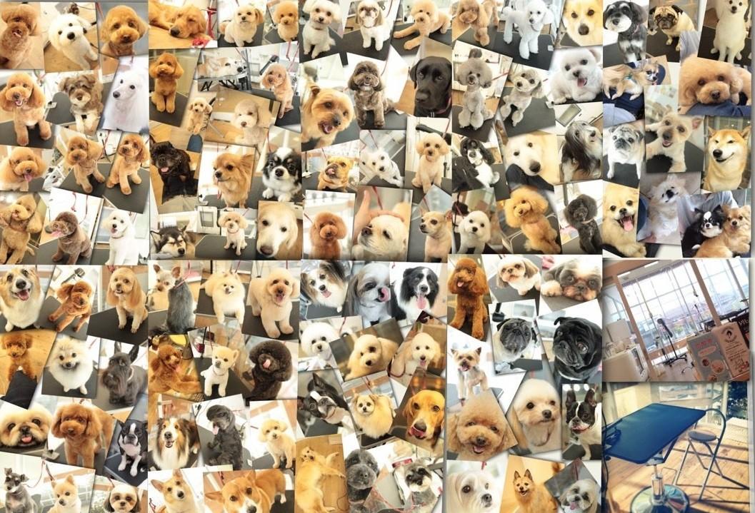 トリミングルーム プタハ もりやま犬と猫の病院店 集合