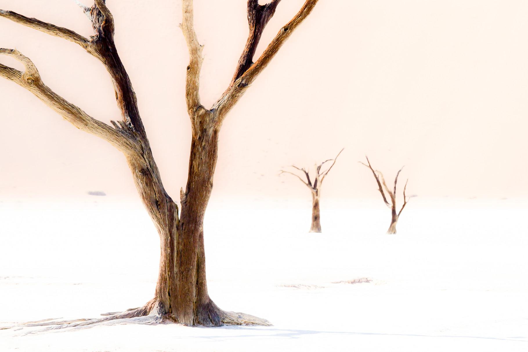 Wüstenlicht - Namibia