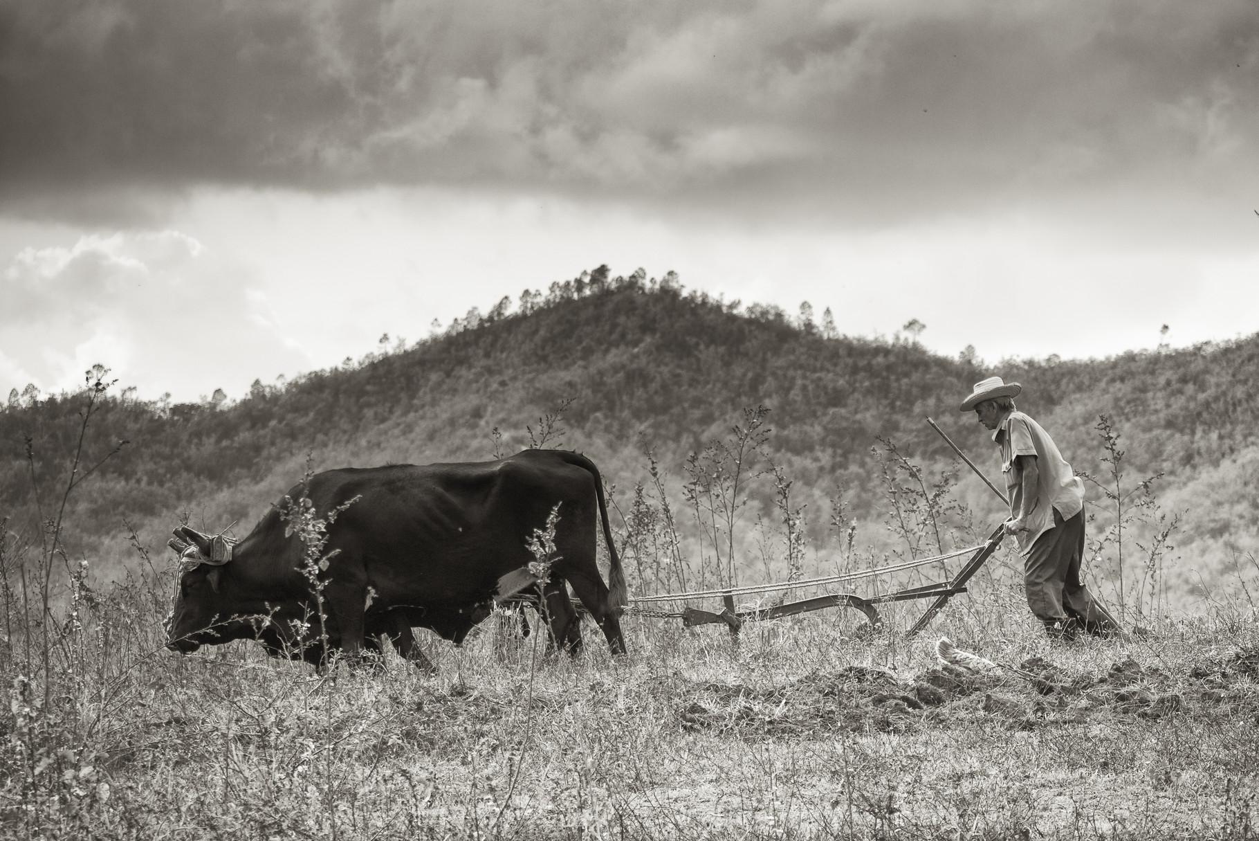 Harte Arbeit - Kuba