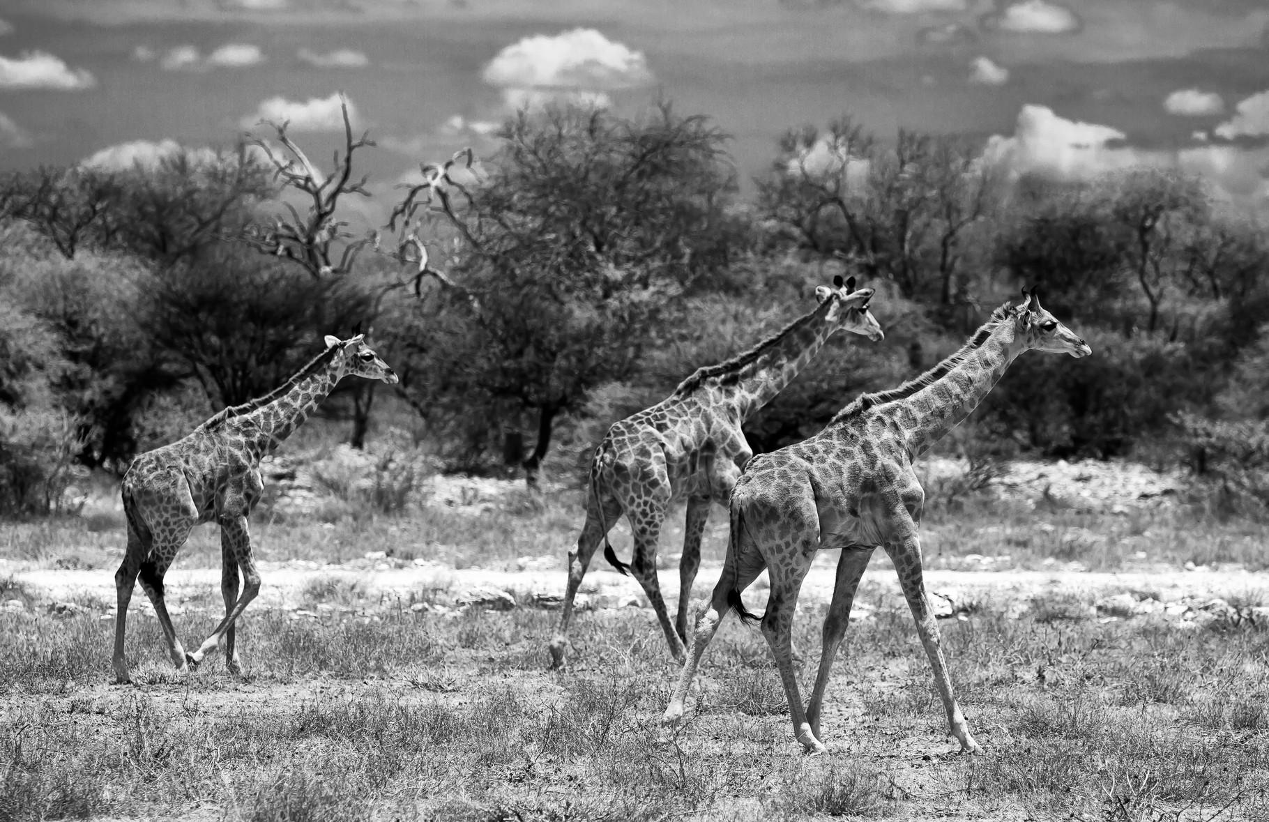 Ethosa NP - Namibia