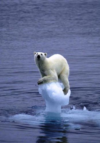 Réchauffement climatique ! Pas de panique, Dieu est là et il nous aiment ? Mais il déteste les ours blancs.
