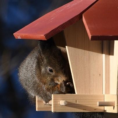 Nicht nur Vögel freuen sich über das Futter (Bild Ueli Huber)