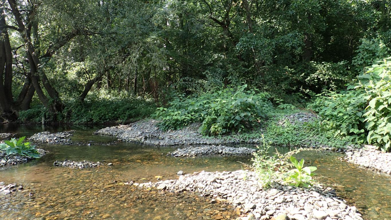 Hier fließt die Oker wild und formt dynamische Schotterbänke. Foto: ÖNSA/N.Feige
