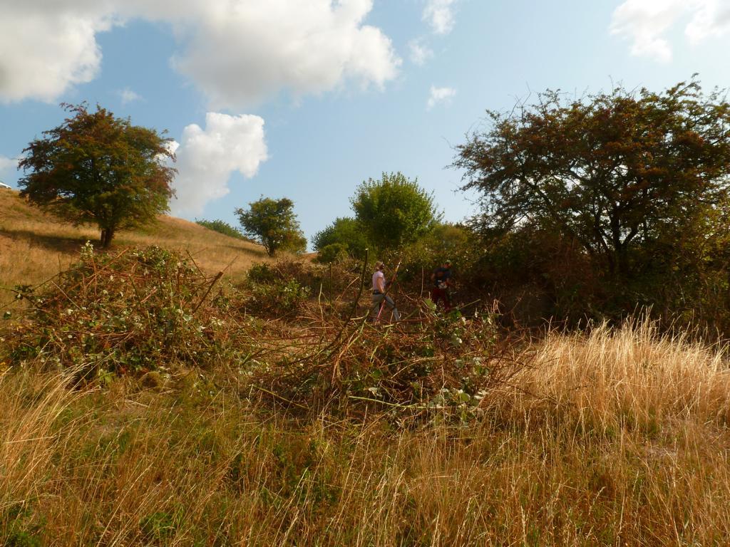 Entfernung der Armenischen Gartenbrombeere, die den wertvollen Steppenrasen zuwächst. Foto: ÖNSA/M. Neßmann