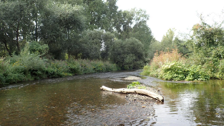 Totholz und Schotterbänke aus Kies sind wertvolle Strukturen in Gewässern. Foto: ÖNSA/N.Feige