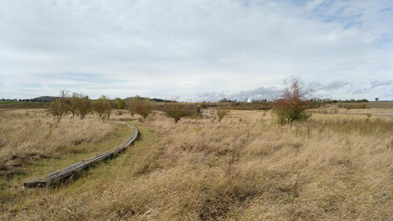 Ein kurzer Wanderweg führt zu einer Beobachtungsplattform, von der aus man das Gebiet überblicken kann. Foto: ÖNSA/N.Feige
