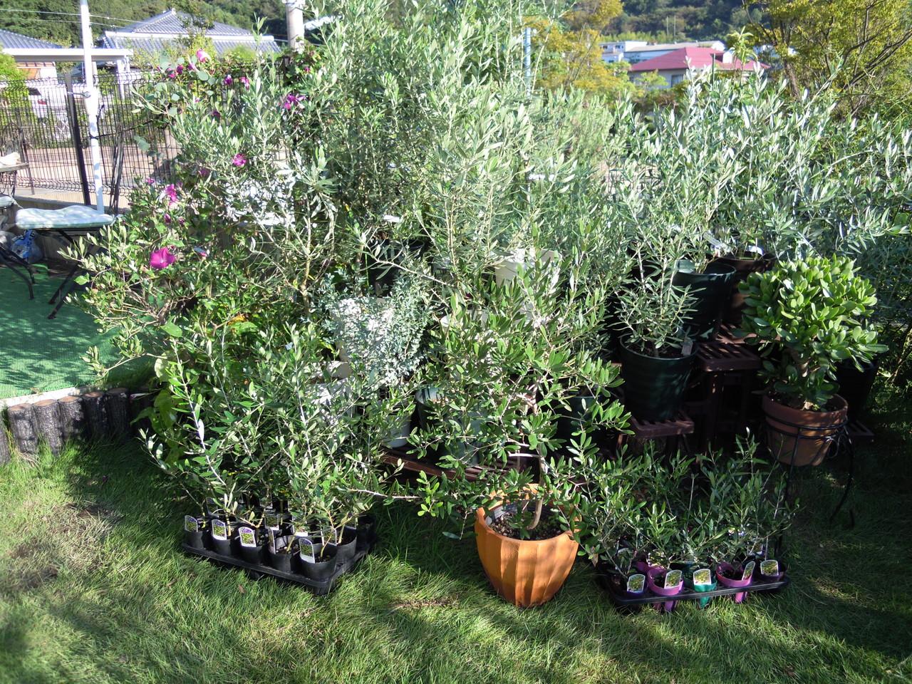 Olive ガーデン