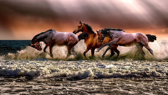 Gedanken sind manchmal wie wilde Pferde
