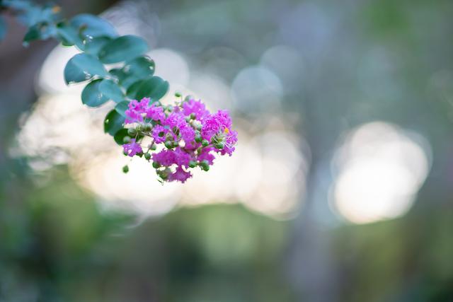 東京 渋谷区 代々木公園 出張撮影