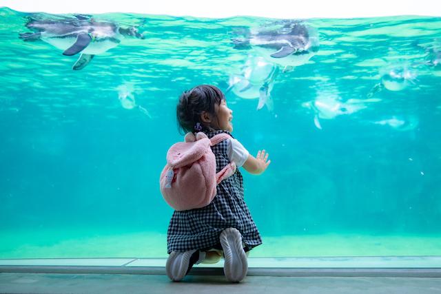 東京 江戸川区 葛西臨海水族園 誕生日 出張撮影 こども