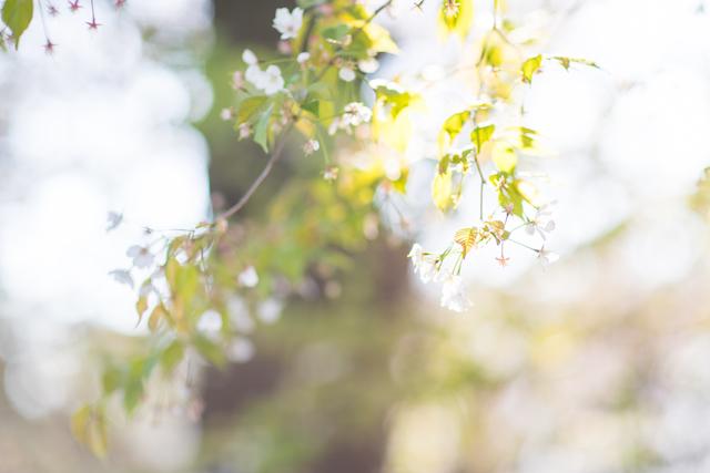 東京都 練馬区 光が丘公園 出張撮影