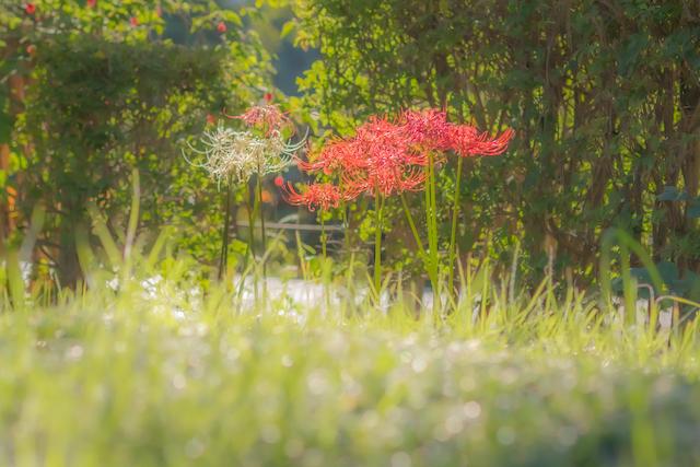 東京 練馬区 光が丘 出張撮影 出張カメラマン プロフィール撮影 家族写真 秋の陽公園 料金安い お得
