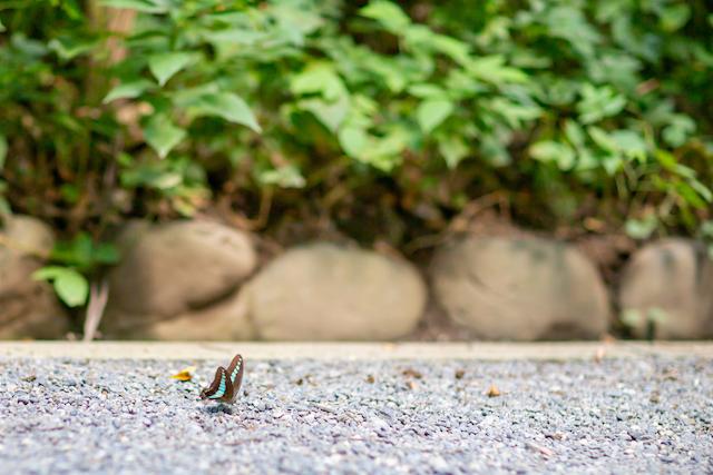 東京 渋谷区 明治神宮 出張撮影