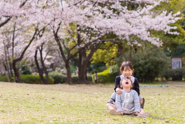 練馬区 光が丘 入学撮影 小学校 しまい撮影 出張撮影 こども 桜