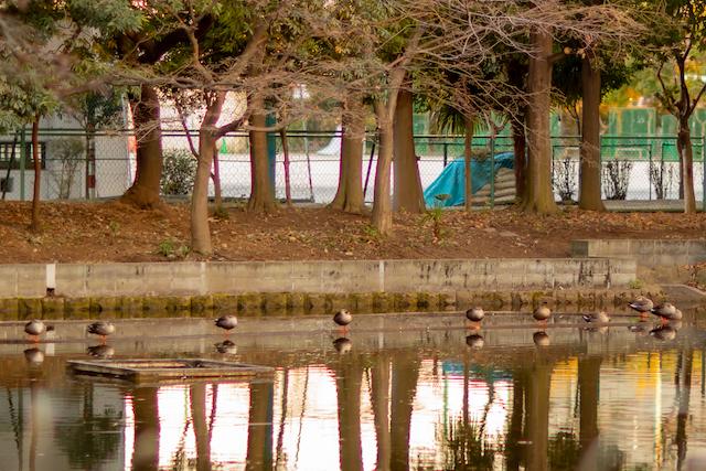 東京 練馬区 光が丘 カエル池 公園撮影 出張撮影 女性カメラマン