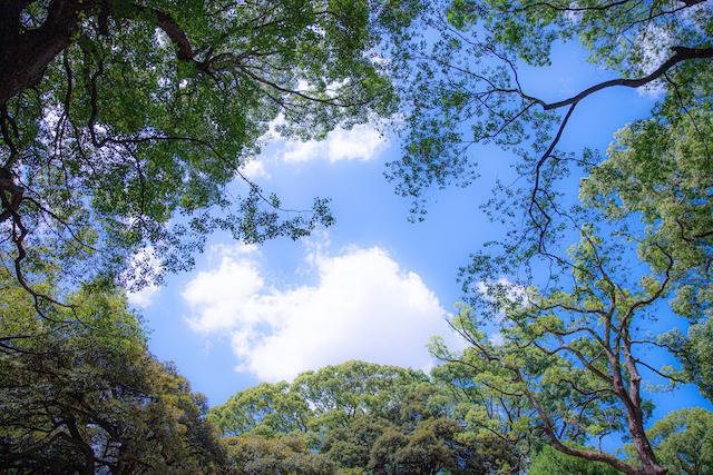 東京 練馬区 光が丘 こども 出張撮影 女性カメラマン 家族写真