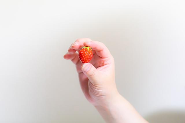 いちごの収穫☆