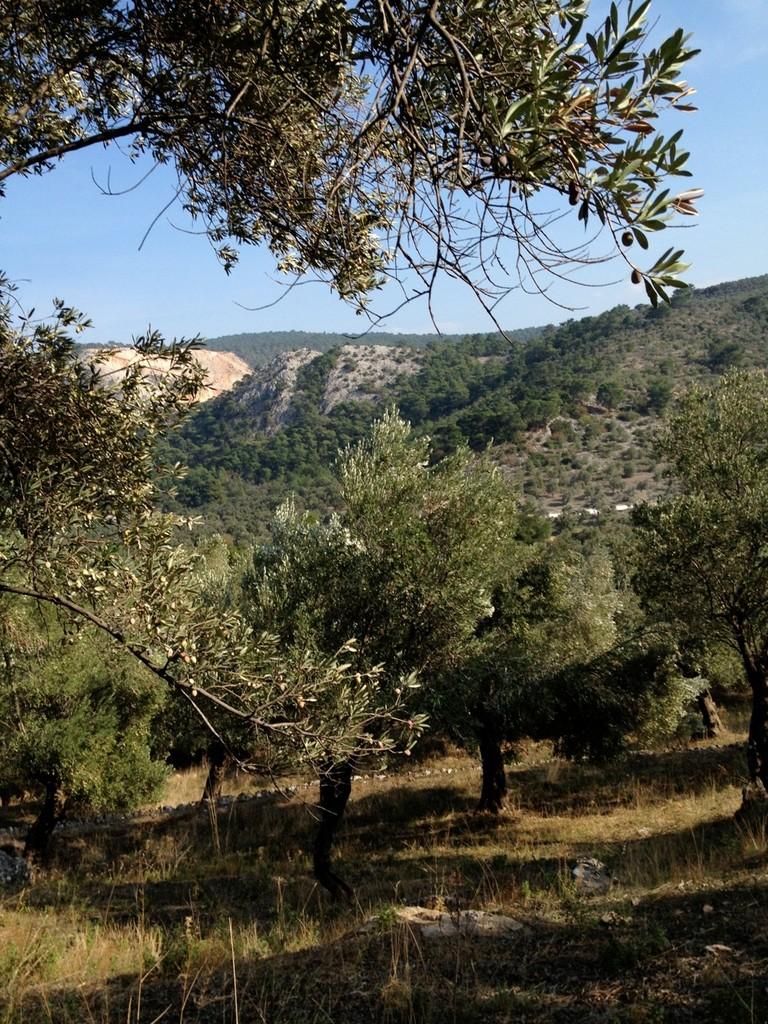 Im Olivengarten sind viele Höhenmeter zu überwinden, wenn man in ganz durchwandern will.