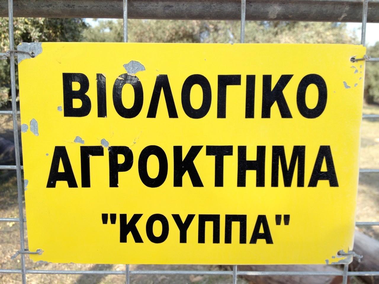 Angekommen - unser Partner-Hain auf Lesbos.
