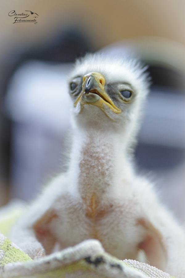 Ein Babyadler :)