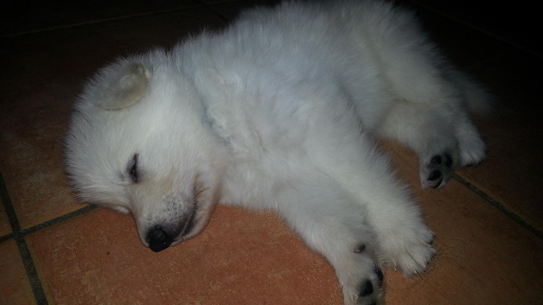 30.03.16... beim Spielen einfach eingeschlafen :-)