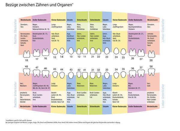Bioresonanz - Bezüge zwischen Zähnen und Organen