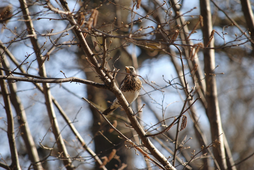 весенняя птичка