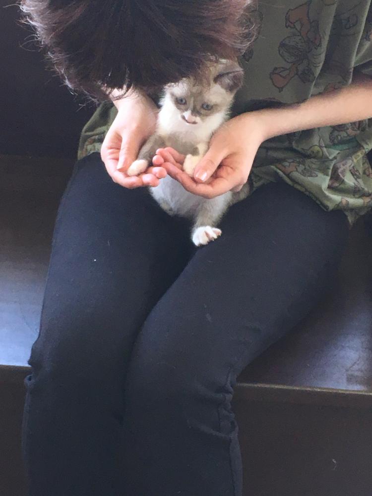 ボンネット猫ピコ