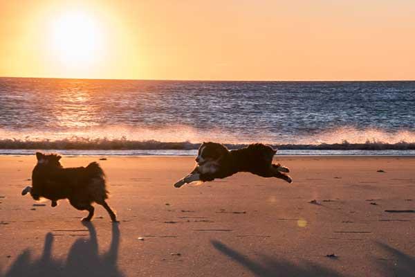 Spiel, Spaß und gute Laune in der untergehenden Sonne, Rantum, Sylt
