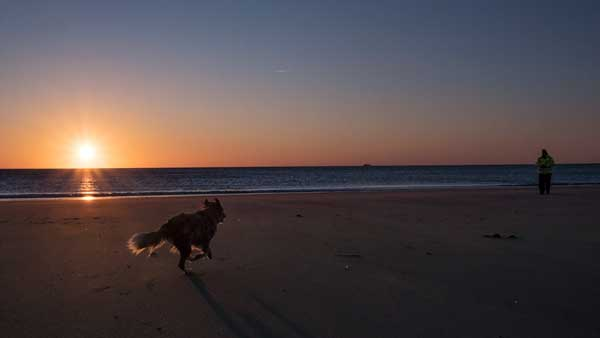 Schnell zum Frauchen, Abendstimmung am Strand von Rantum, Sylt